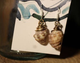 Shell Earrings in half