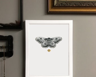 Perseverance Archival Pigment Print of Original Graphite Moth Drawing with 24kt Gold Leaf Embellish in White Frame