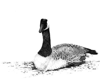 Canada Goose drawing, goose art, black and white art, canad goose print, wild bird art, bird prints, canada geese drawing, geese art