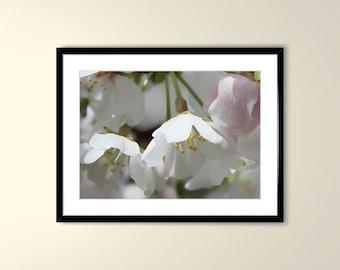 Cherry Blossoms Printable Art, Digital Download
