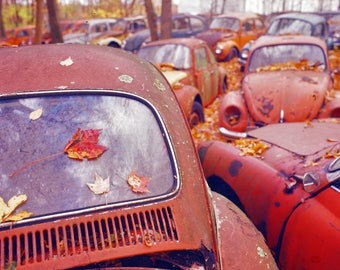 Print - Abandoned VW Graveyard
