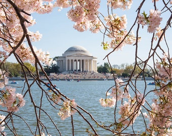 Cherry Blossoms Print, Washington DC, Cherry Blossoms Photo, Tidal Basin, Jefferson Memorial, DC Photography, Cherry Blossom Festival