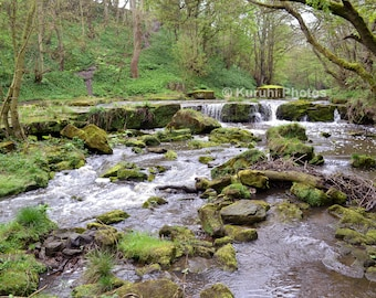 Forest Stream Yorkshire Photo Or Canvas Print Multiple Sizes