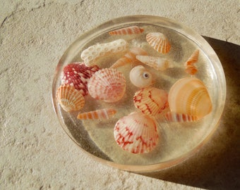 Sea Shell Paperweight