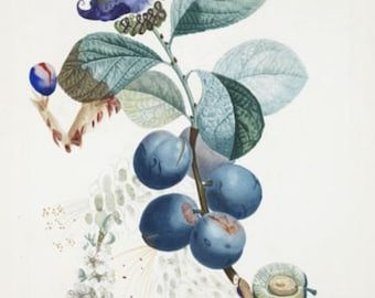 Set of x15 VERY RARE Salvador Dali - FruitDalí Series/Botanical Art