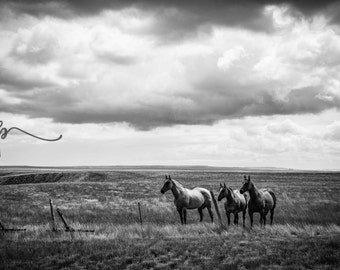 3 Horses - DIGITAL DOWNLOAD - Black and White Montana Landscape Photography