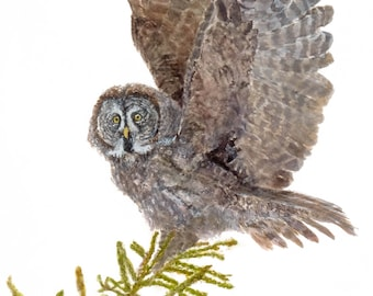 Archival Giclee Fine Art Print of Great Grey Owl in Evergreen Treetop with Pine Cones by artist Joy Neasley