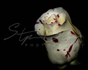 Forbidden Love - photography - print - rose