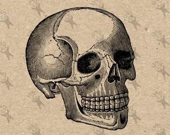 Vintage retro drawing Human Skull image Instant Download Digital printable clipart graphic Burlap Fabric Transfer Iron On  Decor 300dpi