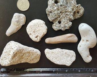 7 Beach Stones with Holey Stone / Hag Stone