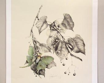 Luna Moth & Basswood By Christina Smith Giclee Limited Edition Botanical 1/50