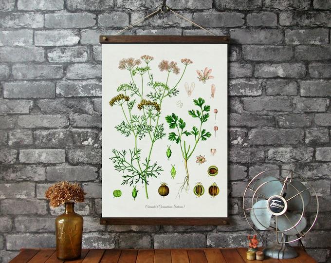 Coriander Botanical Chart