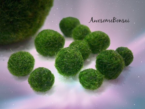 5x Marimo Moss Ball, Mini Living Aquatic Growing Plant for Terrarium or Fish Bowl,Jewelry Making Supplies