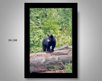 04.248 Black Bear Cub Limited Edition, Signed and Numbered 11x14 Matted Images (black mat)