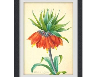 Digital Botanical Print - artwork - poster - orange flower - botanical illustration - botany print - #4 INSTANT DOWNLOAD ART