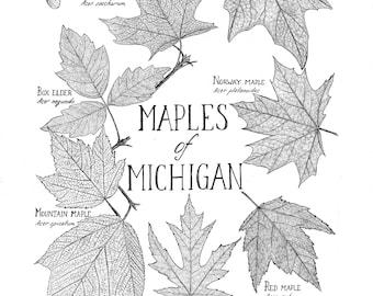 Maples of Michigan