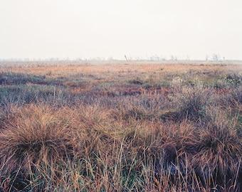 Colorful Grasses, Minimalist Print, Louisiana Gulf Coast Photography, Louisiana Wall Art, Gift for Dad, Swamp Grass, Film Photography