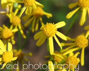digital yellow flowers