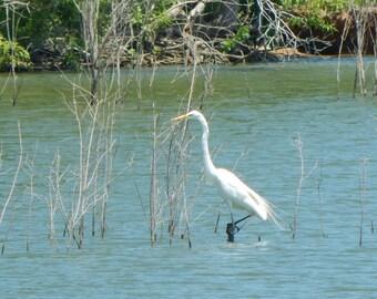 Crane on a Lunch Break