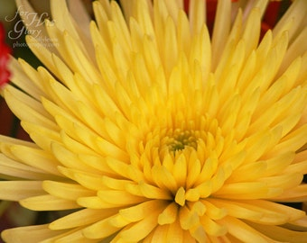 "047 ""Vibrant Yellow Flower"""