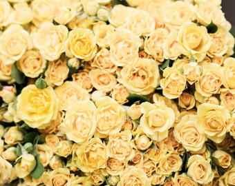 Paris Photograph -  The Yellow Roses, Les Roses Jaunes, Spring in Paris, French Home Decor, Large Wall Art,
