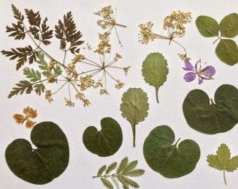 Pressed Flower Art, Dried Pressed Plants, Framed Pressed Plants