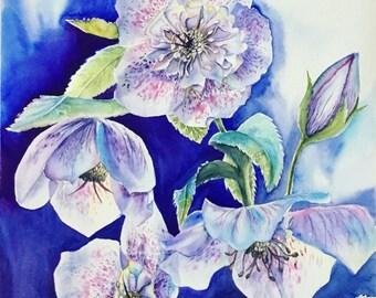 Hellebore, flowers, spring flowers