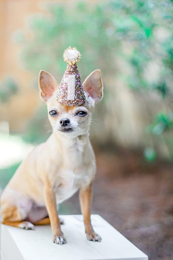 Dog Birthday || Cat Hat || Animal Hat Dog Crown || Busters Party Shop || Birthday Crown || Party Supplies
