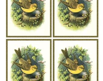 Vintage YELLOWHAMMER BIRD and NEST - Framed Image Sheet - Digital Instant Download - nature ephemera collage supply