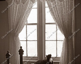 Sepia or Black & White Mindy the Kitty Cat Crossed Paws Waiting in Bedroom Window  Fine Art Photography Photo Print