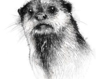 European otter | Limited edition fine art print from original drawing. Free shipping.
