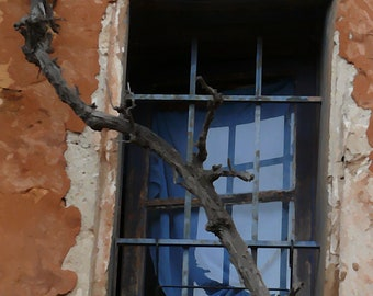 French Window with Vine