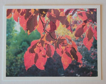 Fall Leaves, Dogwood Leaves, note card, blank greeting card, trees, woodland, red, fine art, single card, photo greeting cards,