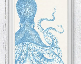 Vintage octopus n 17 - sea life print-Light blue giant octopus-  vintage natural history SAS180