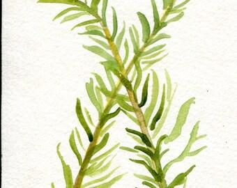 Original Rosemary  watercolor painting, herbs, kitchen decor, food, kitchen wall art 4 x 6 herbs watercolors paintings
