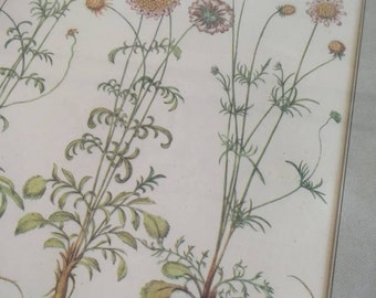 Framed Botanical Print, Antique Print, Botanical Print, Antique Florals, Botanical Art Print, Themed Wall, Accent Wall, Original Print
