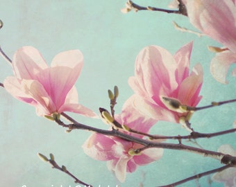 Magnolia Flowers Photograph Pink Blossoms Romantic Shabby chic Wall Art Nature Pale Teal Pink 8x8