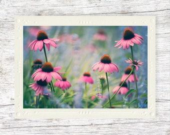 Wildflower Card, Flower Photo, Echinacea, Floral Art, Coneflower