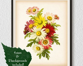Poster vintage, Botanical Art, Antique print, Flower print, Botanical wall art, Chrysanthemum, Printable digital, Illustration, Prints, #13