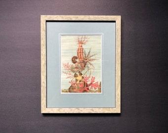 c. 1836 FRAMED SEA CUCUMBER print - original antique print - sea life ocean - beach house art - marine animal  print - ready to hang