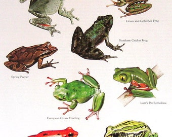 Tree Frogs Vintage 1984 Animals Book Plate