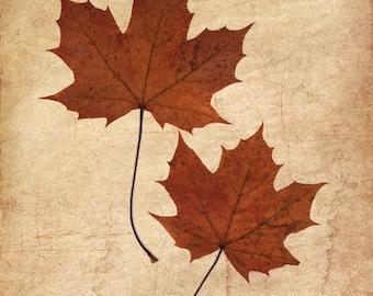 Zwei Ahorn Blätter, Herbst Blätter, FineArt Fotodruck, Laub-Ahornblatt, Orange braun