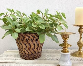 Darling Vintage Multi-Tone Woven Wicker Basket  / Small Basket Weave Rattan Houseplant Planter / Bohemian Storage Basket