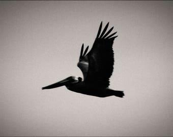 pelican pt.2, California. 2017.