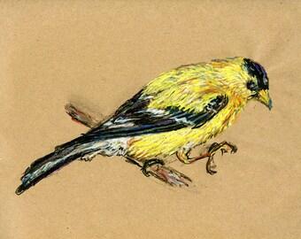 Goldfinch - Original Drawing - Bird Art in Charcoal, Chalk Pastel & Ink