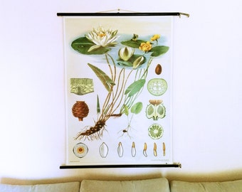 Flower Wall Decoration, White Waterlily, Lotus, Water Rose, Lunartics Vintage, Educational Chart, Botany Map, Jung Koch Quentell