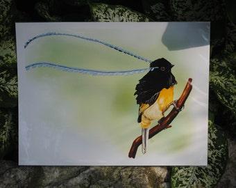 King of Saxony Bird-of-Paradise Digital Fine Art