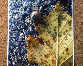 Snail and Leaf Print