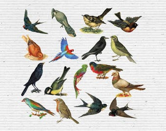 Vintage Birds Cliparts, Images in PNG Transparent Background, Digital Graphics for Scrapbooking, Cardmaking and Party Printables