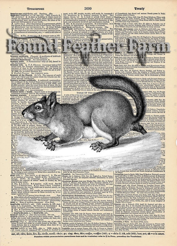 """Vintage Antique Dictionary Page with Antique Print """"Black and White Grey Squirrel"""""""